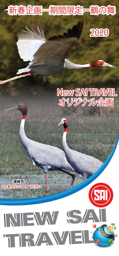 New Sai Travel